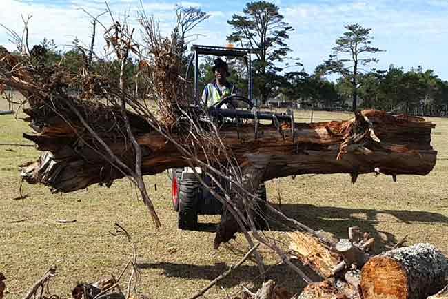 CL30 Timber Log Grapple